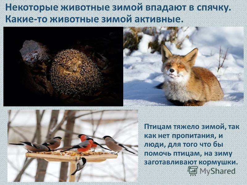 Некоторые животные зимой впадают в спячку. Какие-то животные зимой активные. Птицам тяжело зимой, так как нет пропитания, и люди, для того что бы помочь птицам, на зиму заготавливают кормушки.