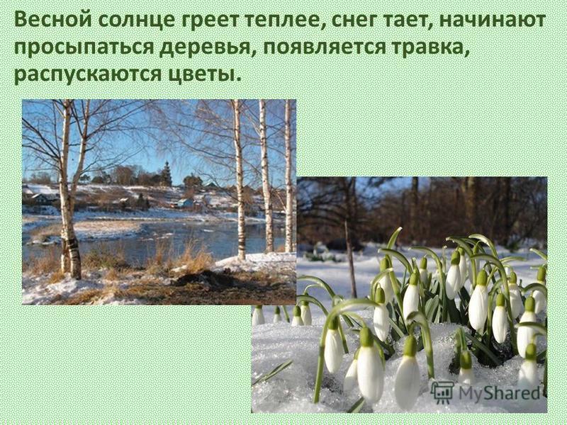 Весной солнце греет теплее, снег тает, начинают просыпаться деревья, появляется травка, распускаются цветы.