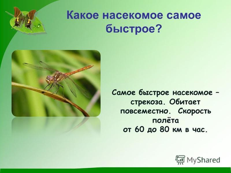 Какое насекомое самое быстрое? Самое быстрое насекомое – стрекоза. Обитает повсеместно. Скорость полёта от 60 до 80 км в час.