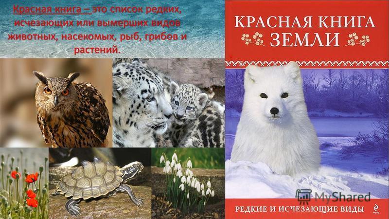 Красная книга – это список редких, исчезающих или вымерших видов животных, насекомых, рыб, грибов и растений.