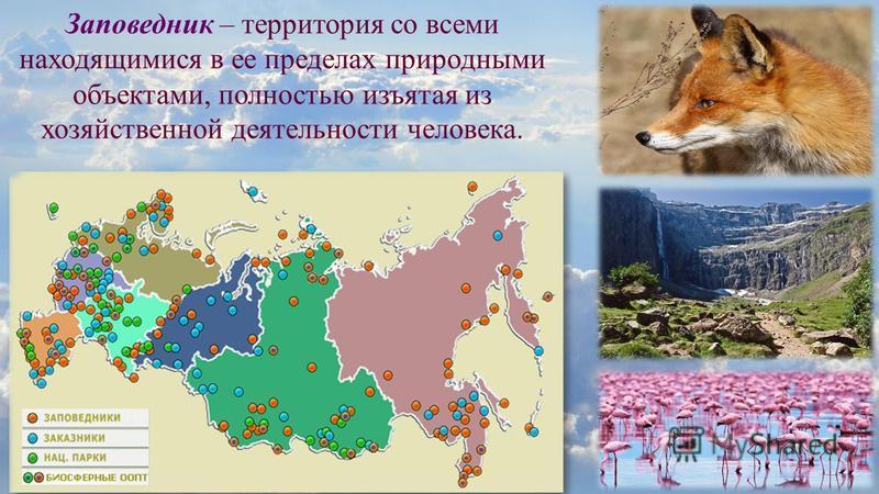 Заповедник – территория со всеми находящимися в ее пределах природными объектами, полностью изъятая из хозяйственной деятельности человека.