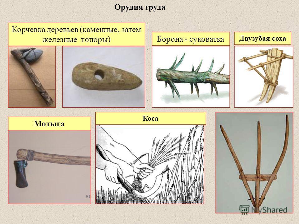 Орудия труда Корчевка деревьев (каменные, затем железные топоры) Мотыга Борона - суковатка Двузубая соха Коса