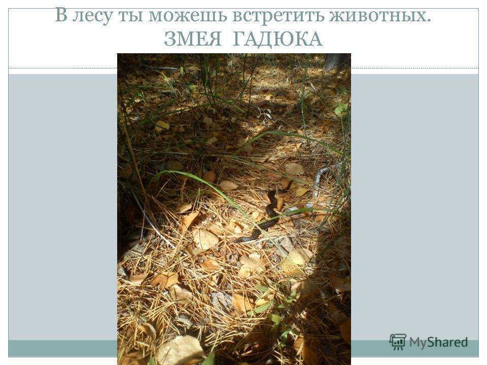 В лесу ты можешь встретить животных. ЗМЕЯ ГАДЮКА