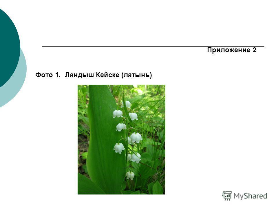 Приложение 2 Фото 1. Ландыш Кейске (латынь)