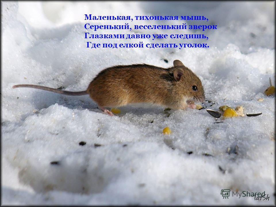 Маленькая, тихонькая мышь, Серенький, веселенький зверок Глазками давно уже следишь, Где под елкой сделать уголок.