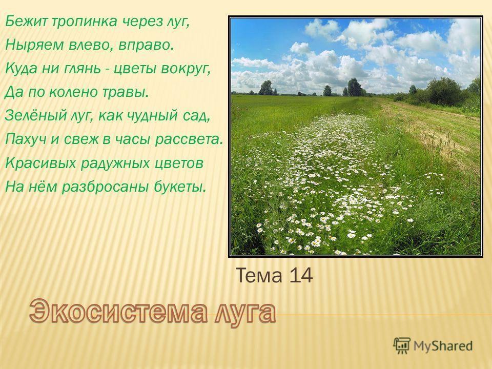 условия очень темм недели поле луг сад России