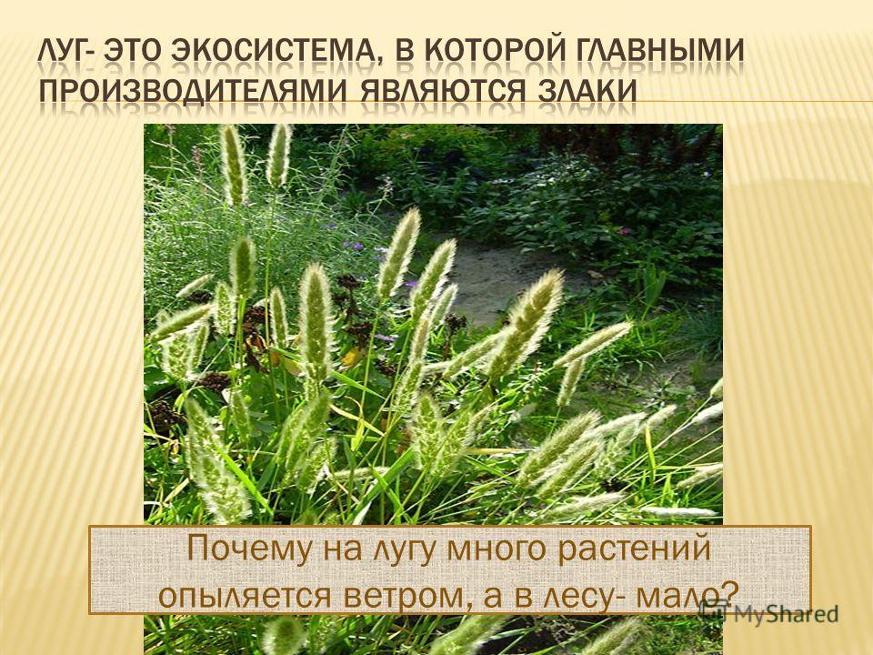 Почему на лугу много растений опыляется ветром, а в лесу- мало?