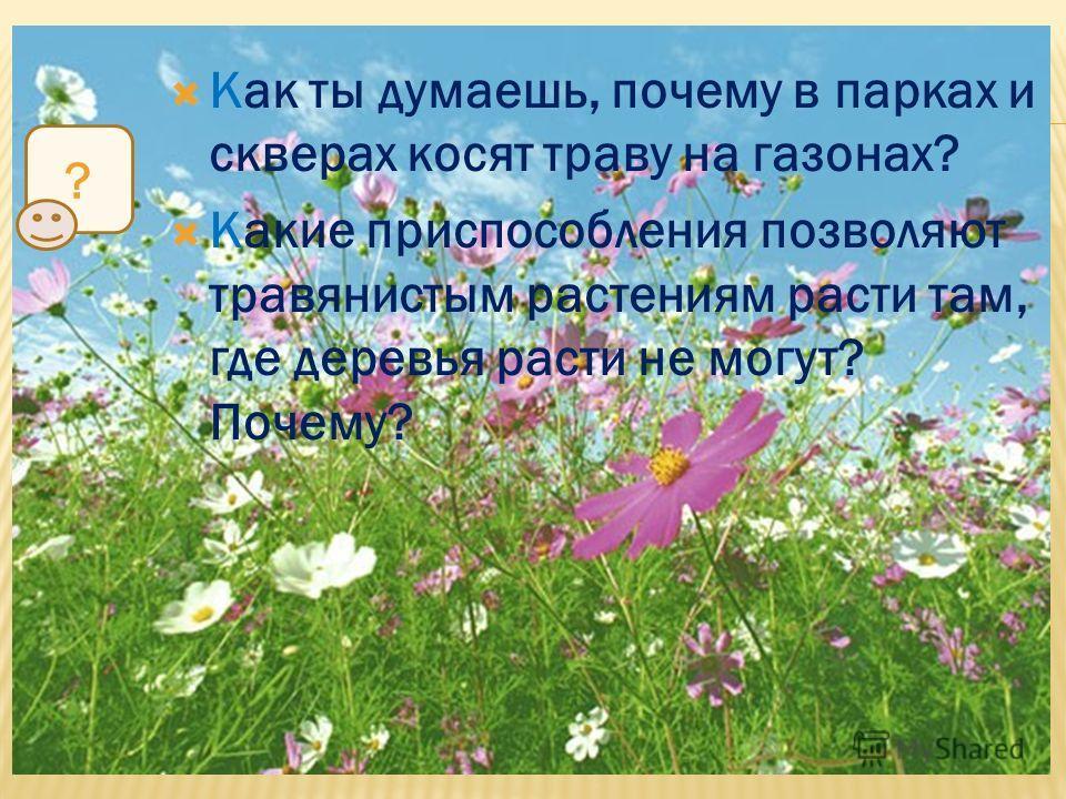 Как ты думаешь, почему в парках и скверах косят траву на газонах? Какие приспособления позволяют травянистым растениям расти там, где деревья расти не могут? Почему? ?