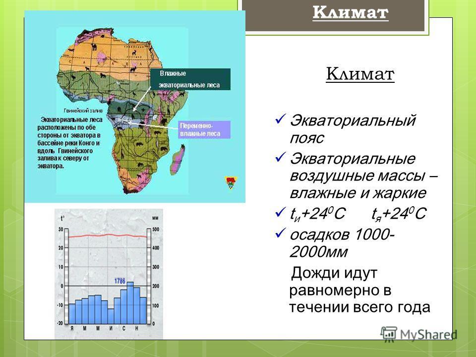 Климат Экваториальный пояс Экваториальные воздушные массы – влажные и жаркие t и +24 0 С t я +24 0 С осадков 1000- 2000 мм Дожди идут равномерно в течении всего года Климат