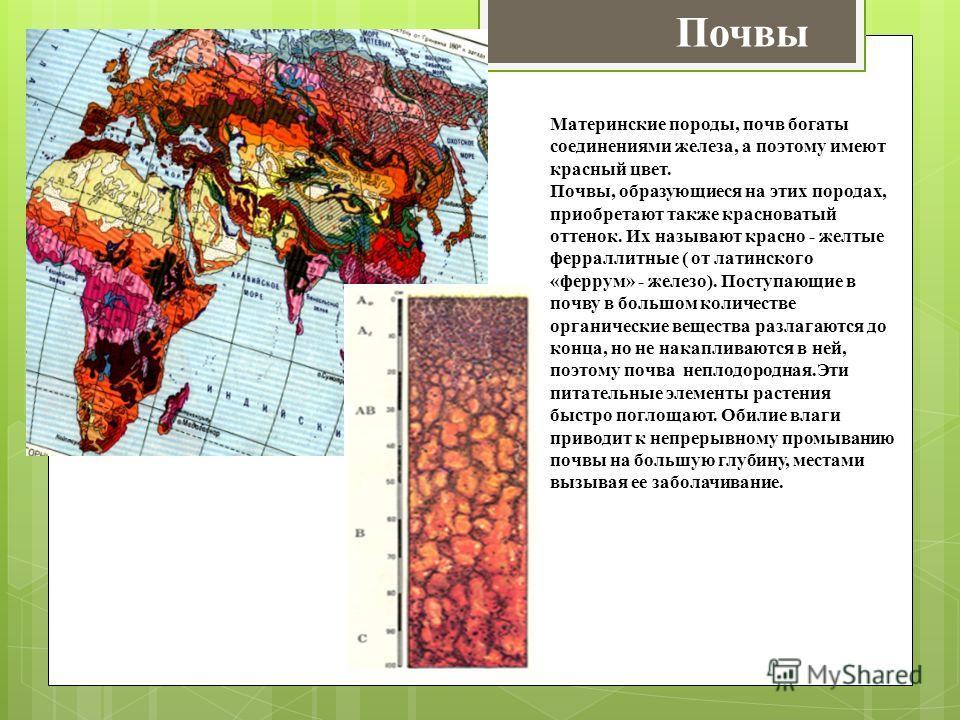 Почвы Материнские породы, почв богаты соединениями железа, а поэтому имеют красный цвет. Почвы, образующиеся на этих породах, приобретают также красноватый оттенок. Их называют красно - желтые ферраллитные ( от латинского «феррум» - железо). Поступаю
