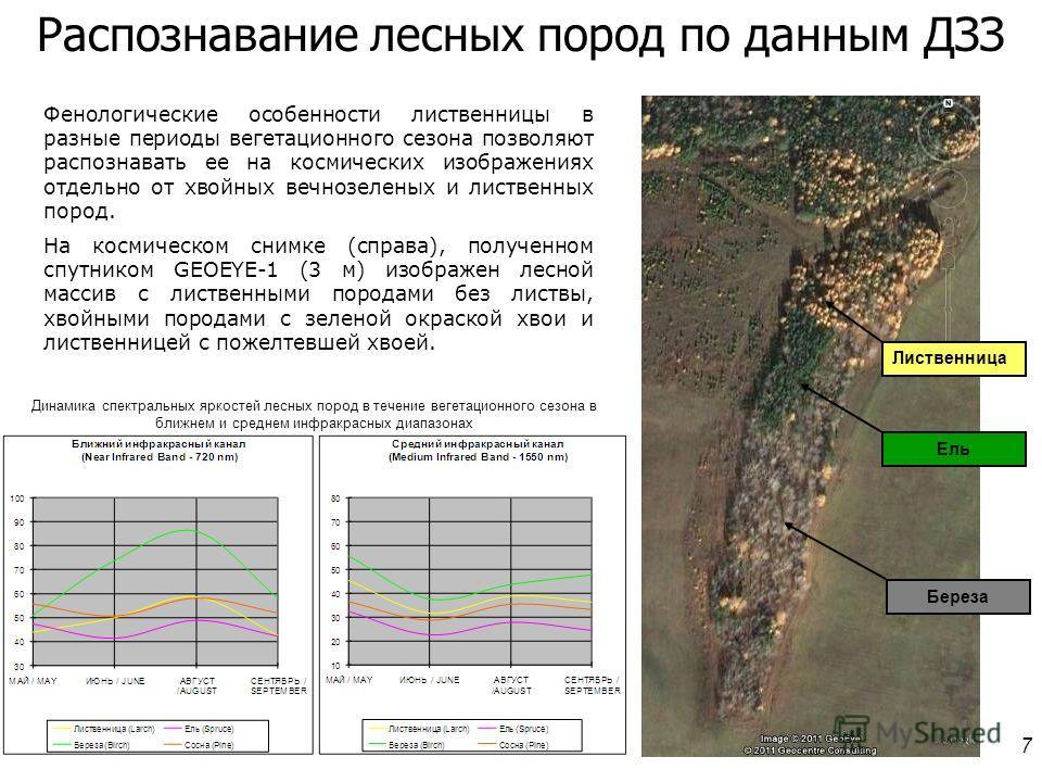 7 Фенологические особенности лиственницы в разные периоды вегетационного сезона позволяют распознавать ее на космических изображениях отдельно от хвойных вечнозеленых и лиственных пород. На космическом снимке (справа), полученном спутником GEOEYE-1 (
