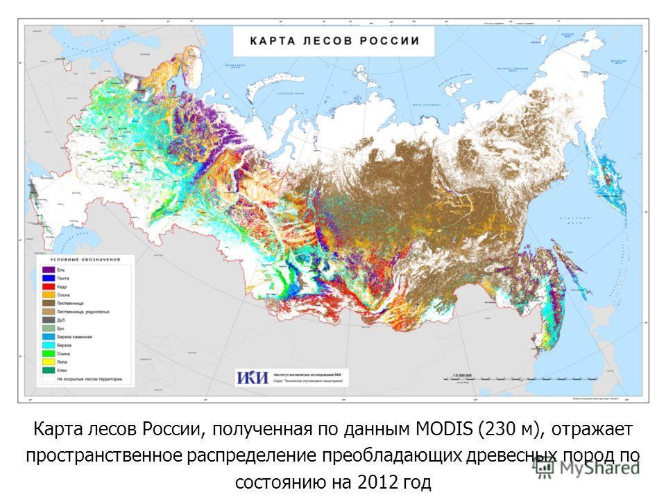 Карта лесов России, полученная по данным MODIS (230 м), отражает пространственное распределение преобладающих древесных пород по состоянию на 2012 год