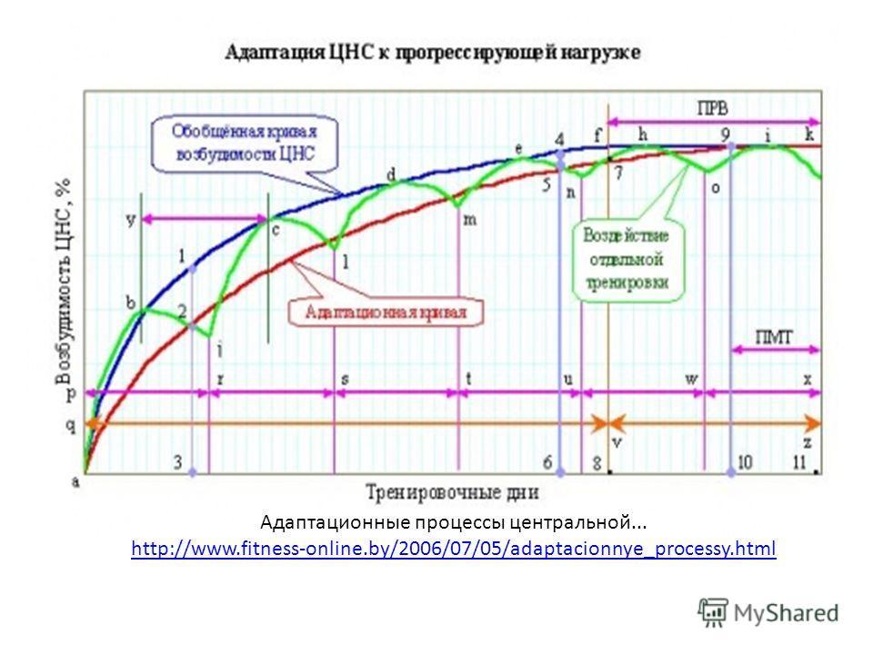 Адаптационные процессы центральной... http://www.fitness-online.by/2006/07/05/adaptacionnye_processy.html