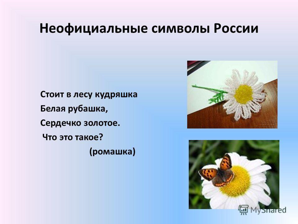 Неофициальные символы России Стоит в лесу кудряшка Белая рубашка, Сердечко золотое. Что это такое? (ромашка)