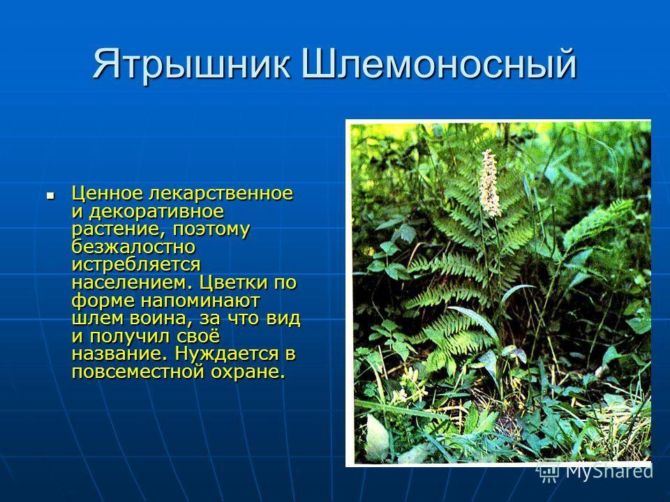 Ятрышник Шлемоносный Ценное лекарственное и декоративное растение, поэтому безжалостно истребляется населением. Цветки по форме напоминают шлем воина, за что вид и получил своё название. Нуждается в повсеместной охране. Ценное лекарственное и декорат