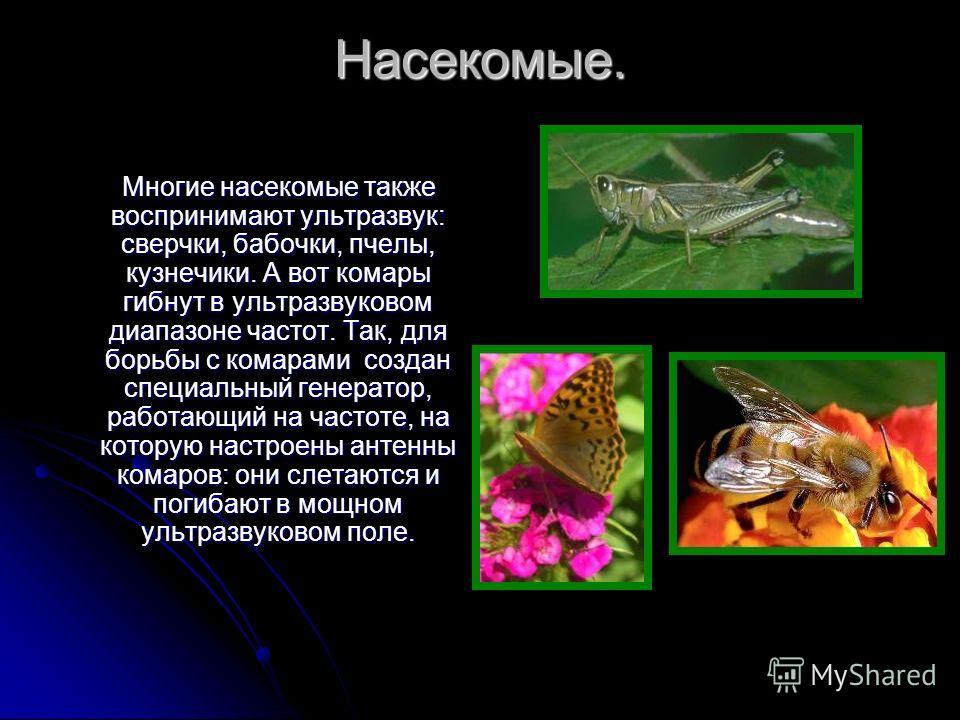 Насекомые. Многие насекомые также воспринимают ультразвук: сверчки, бабочки, пчелы, кузнечики. А вот комары гибнут в ультразвуковом диапазоне частот. Так, для борьбы с комарами создан специальный генератор, работающий на частоте, на которую настроены