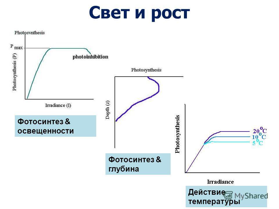 Свет и рост Фотосинтез & освещенности Фотосинтез & глубина Действие температуры