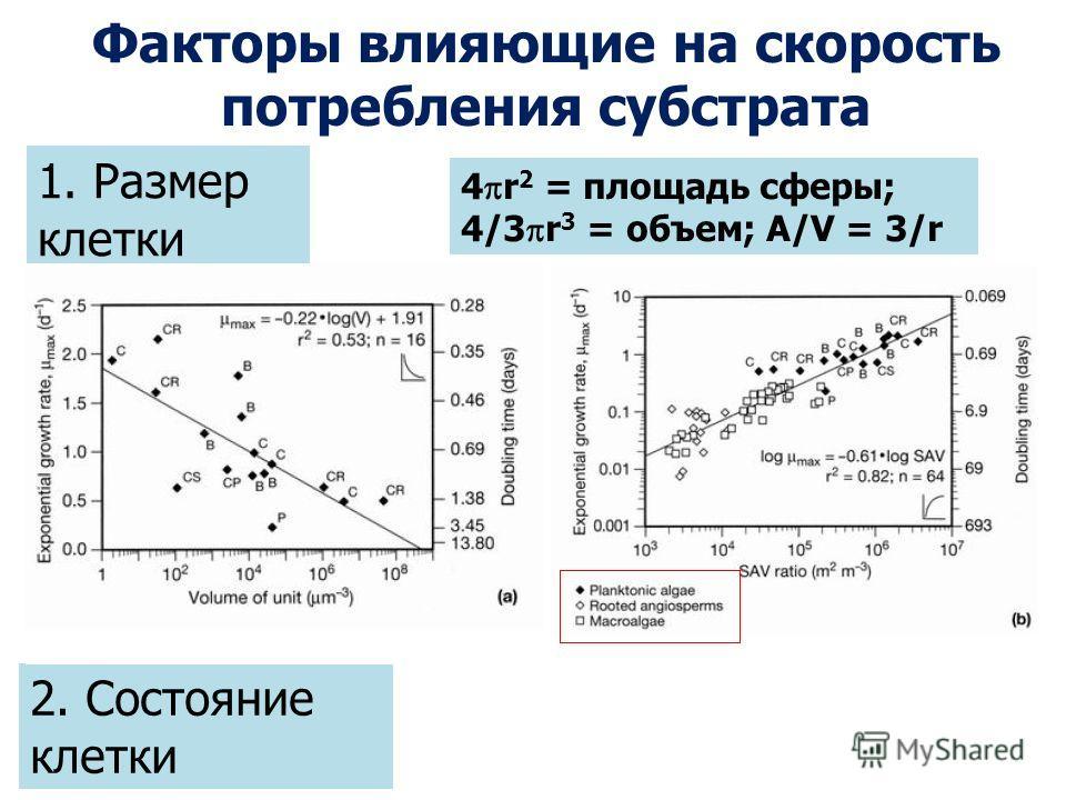 Факторы влияющие на скорость потребления субстрата 1. Размер клетки 4 r 2 = площадь сферы; 4/3 r 3 = объем; A/V = 3/r 2. Состояние клетки