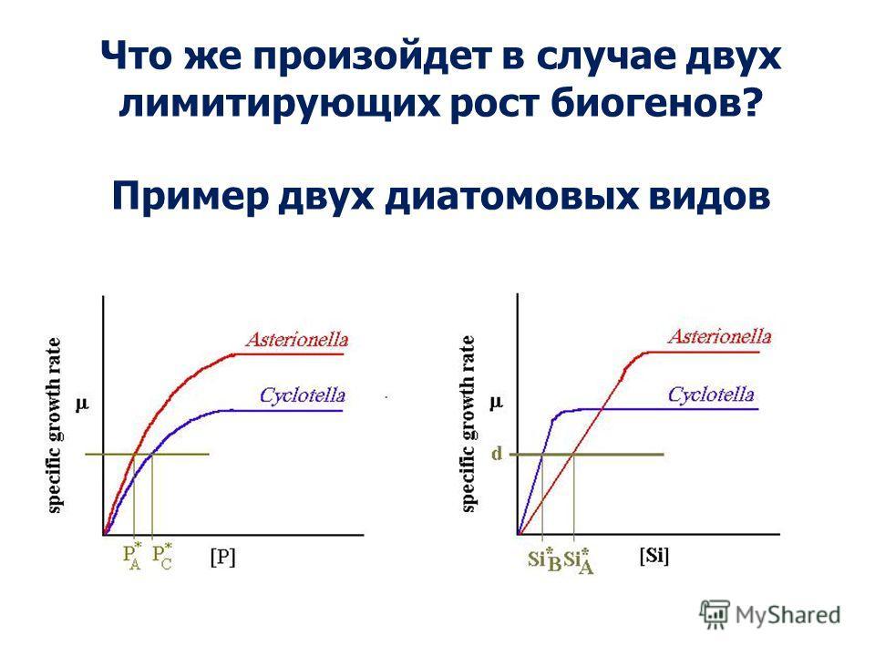 Что же произойдет в случае двух лимитирующих рост биогенов? Пример двух диатомовых видов