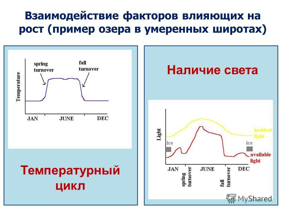 Взаимодействие факторов влияющих на рост (пример озера в умеренных широтах) Наличие света Температурный цикл