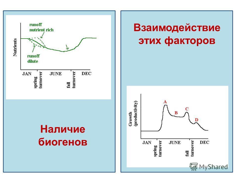 Наличие биогенов Взаимодействие этих факторов
