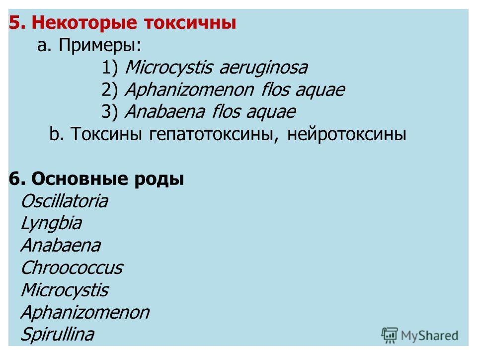 5. Некоторые токсичны a. Примеры: 1) Microcystis aeruginosa 2) Aphanizomenon flos aquae 3) Anabaena flos aquae b. Токсины гепатотоксичны, нейротоксины 6. Основные роды Oscillatoria Lyngbia Anabaena Chroococcus Microcystis Aphanizomenon Spirullina