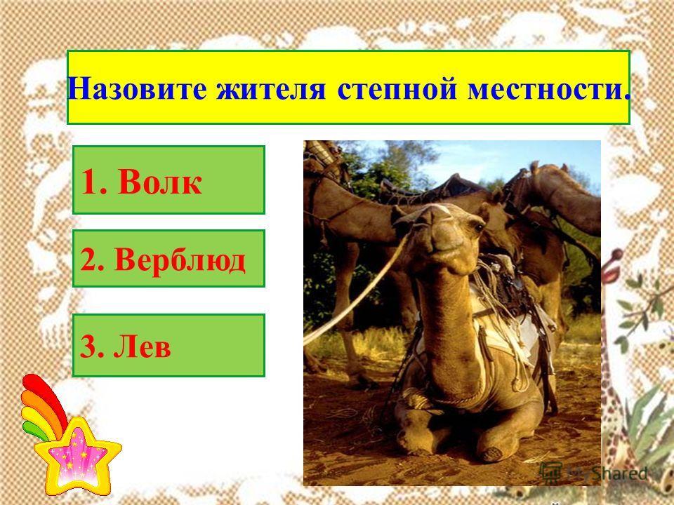 Назовите жителя степной местности. 2. Верблюд 1. Волк 3. Лев