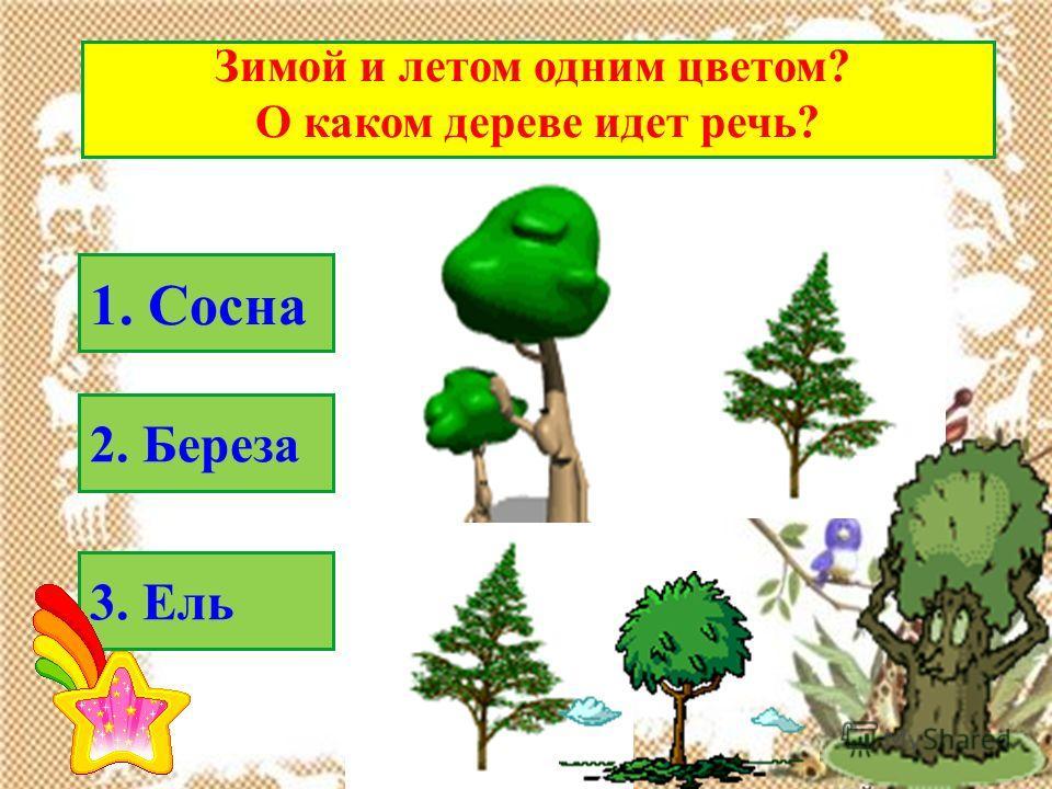 Зимой и летом одним цветом? О каком дереве идет речь? 1. Сосна 2. Береза 3. Ель