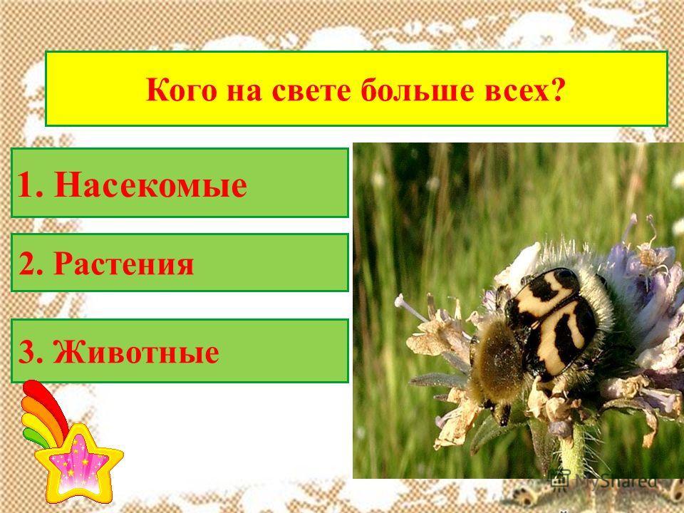 Кого на свете больше всех? 2. Растения 1. Насекомые 3. Животные