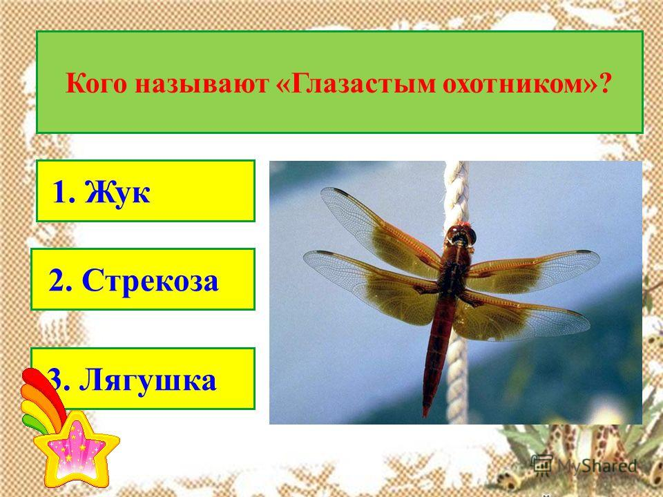 Кого называют «Глазастым охотником»? 1. Жук 2. Стрекоза 3. Лягушка