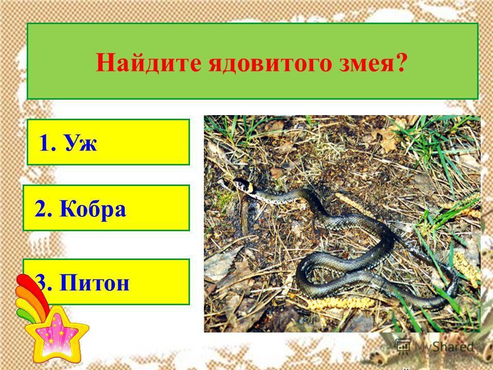 Найдите ядовитого змея? 1. Уж 2. Кобра 3. Питон