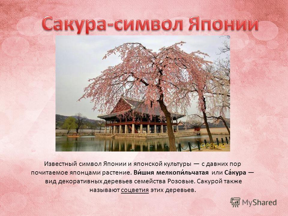 Известный символ Японии и японской культуры с давних пор почитаемое японцами растение. Ви́шня мелкопи́льчатая или Са́кура вид декоративных деревьев семейства Розовые. Сакурой также называют соцветия этих деревьев.