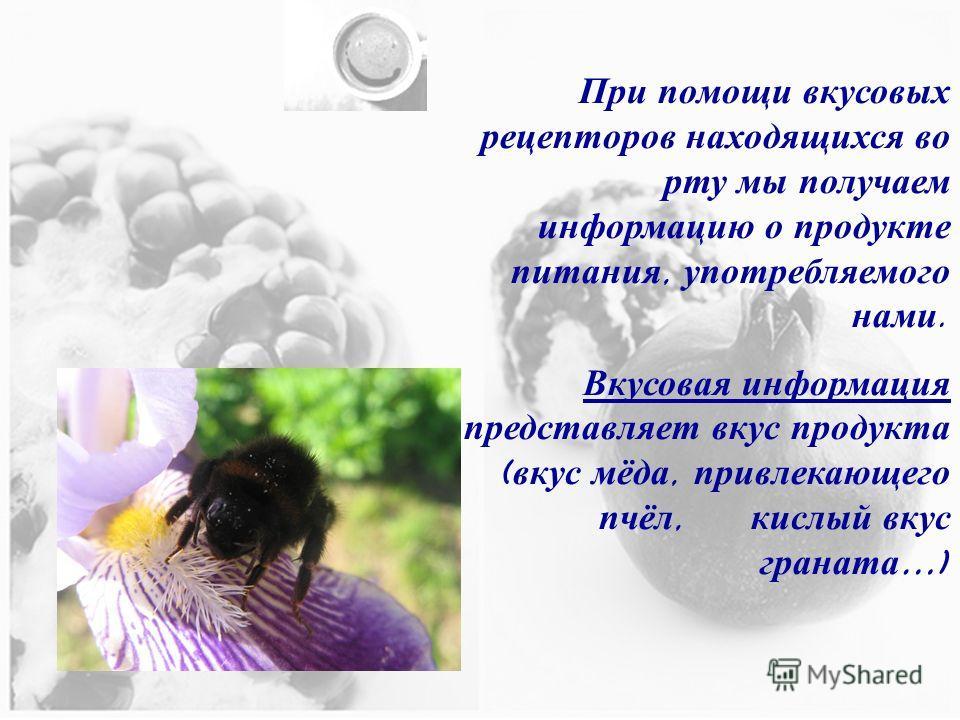 При помощи вкусовых рецепторов находящихся во рту мы получаем информацию о продукте питания, употребляемого нами. Вкусовая информация представляет вкус продукта ( вкус мёда, привлекающего пчёл, кислый вкус граната …)