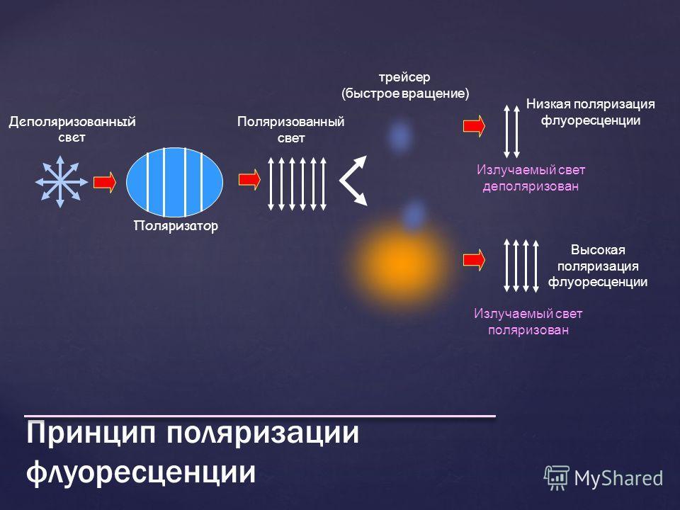 Принцип поляризации флуоресценции Деполяризованный свет Поляризатор Поляризованный свет трейсер (быстрое вращение) Излучаемый свет деполяризован Высокая поляризация флуоресценции Низкая поляризация флуоресценции Излучаемый свет поляризован