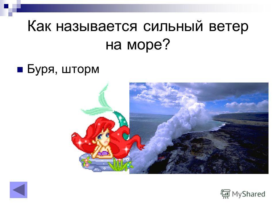 Как называется сильный ветер на море? Буря, шторм