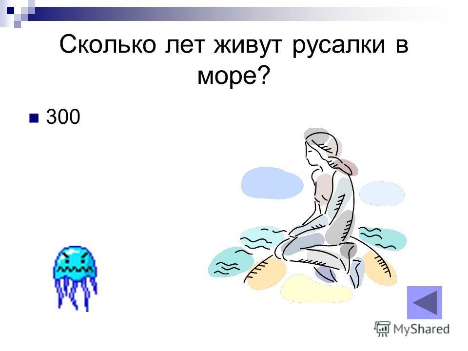 Сколько лет живут русалки в море? 300