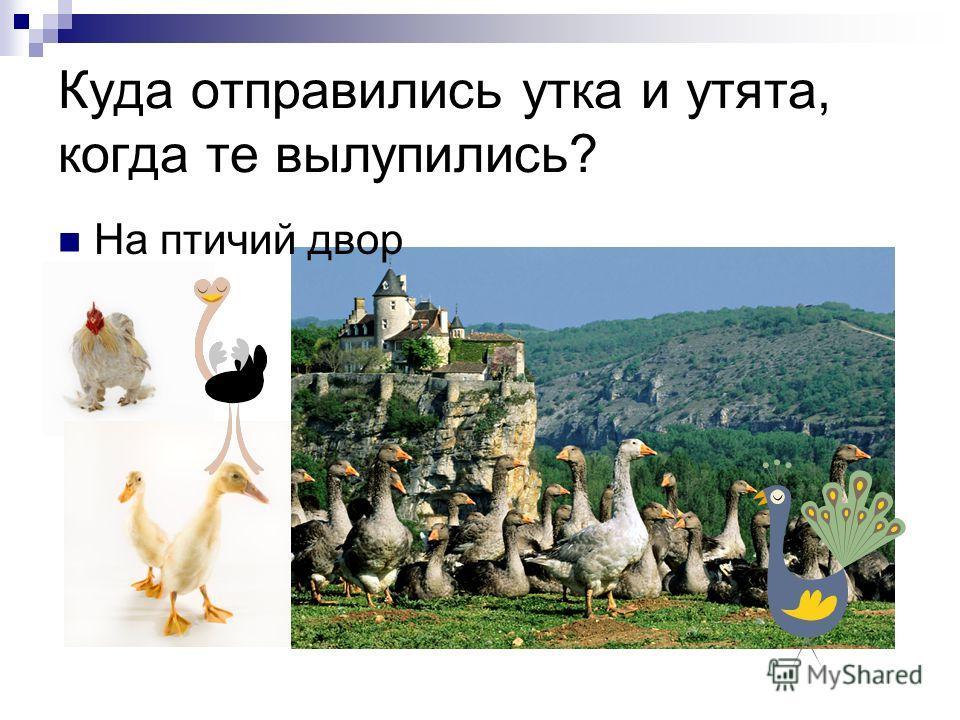 Куда отправились утка и утята, когда те вылупились? На птичий двор