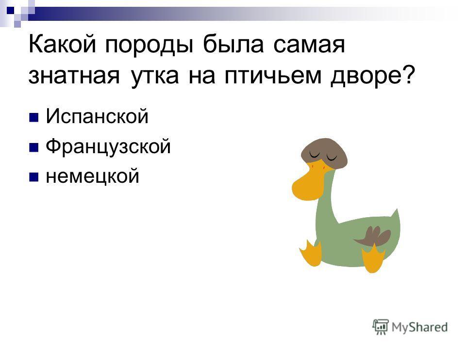 Какой породы была самая знатная утка на птичьем дворе? Испанской Французской немецкой