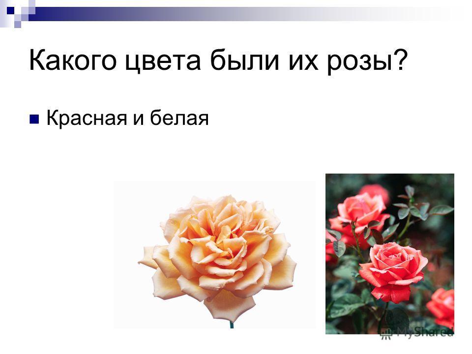 Какого цвета были их розы? Красная и белая