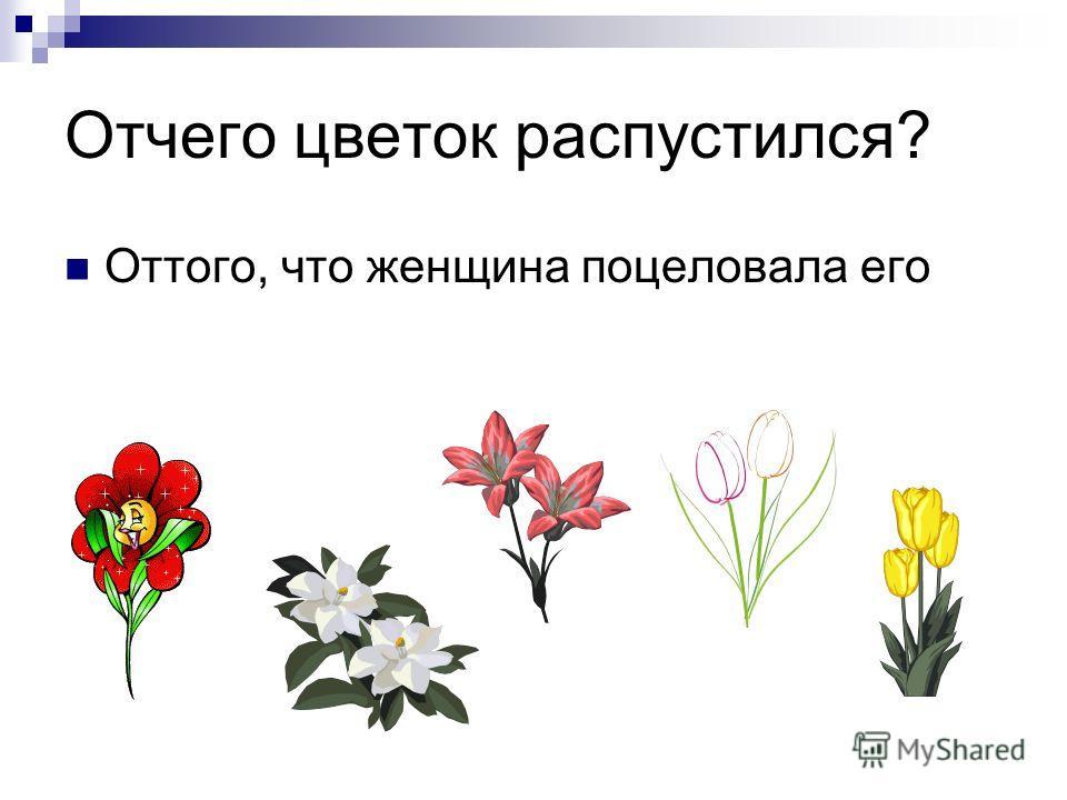 Отчего цветок распустился? Оттого, что женщина поцеловала его