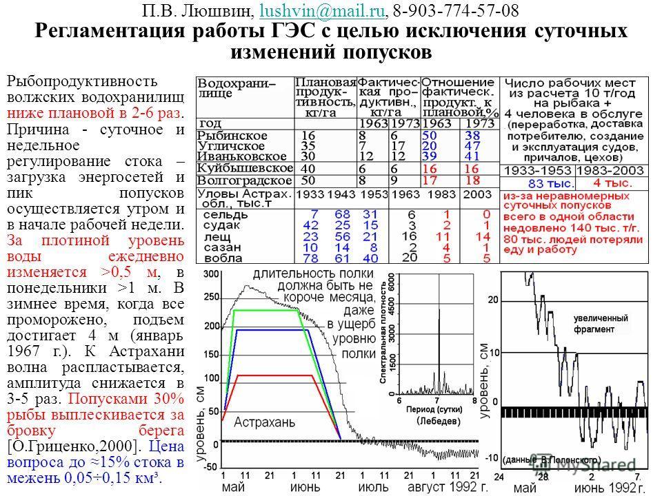 П.В. Люшвин, lushvin@mail.ru, 8-903-774-57-08lushvin@mail.ru Регламентация работы ГЭС с целью исключения суточных изменений попусков Рыбопродуктивность волжских водохранилищ ниже плановой в 2-6 раз. Причина - суточное и недельное регулирование стока