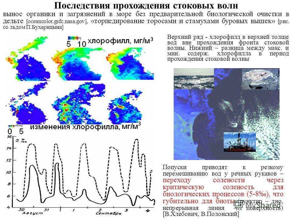 Верхний ряд - хлорофилл в верхней толще вод вне прохождения фронта стоковой волны. Нижний – разница между макс. и мин. содерж. хлорофилла в период прохождения стоковой волны Последствия прохождения стоковых волн вынос органики и загрязнений в море бе