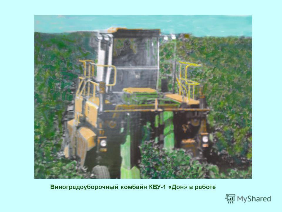 Виноградоуборочный комбайн КВУ-1 «Дон» в работе