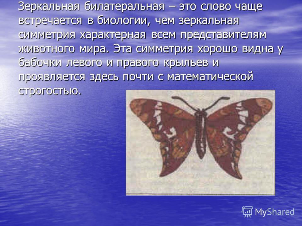 Зеркальная билатеральная – это слово чаще встречается в биологии, чем зеркальная симметрия характерная всем представителям животного мира. Эта симметрия хорошо видна у бабочки левого и правого крыльев и проявляется здесь почти с математической строго