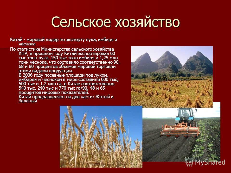Сельское хозяйство Китай - мировой лидер по экспорту лука, имбиря и чеснока По статистике Министерства сельского хозяйства КНР, в прошлом году Китай экспортировал 60 тыс тонн лука, 150 тыс тонн имбиря и 1,25 млн тонн чеснока, что составило соответств