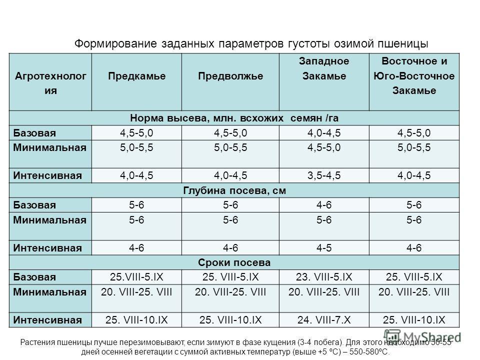 Агротехнолог ия Предкамье Предволжье Западное Закамье Восточное и Юго-Восточное Закамье Норма высева, млн. всхожих семян /га Базовая 4,5-5,0 4,0-4,54,5-5,0 Минимальная 5,0-5,5 4,5-5,05,0-5,5 Интенсивная 4,0-4,5 3,5-4,54,0-4,5 Глубина посева, см Базов