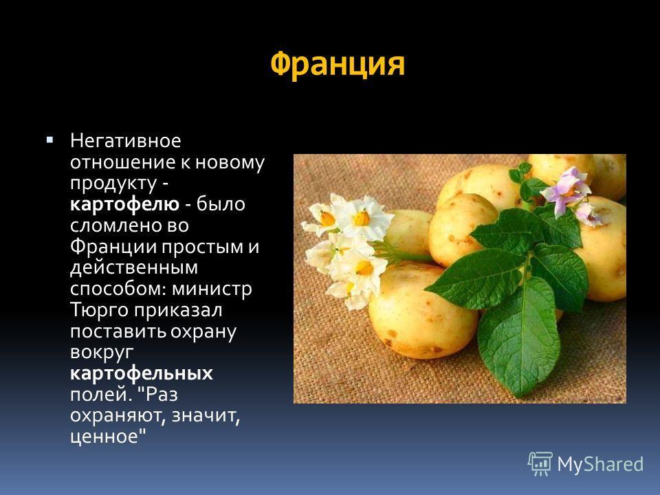 Франция Негативное отношение к новому продукту - картофелю - было сломлено во Франции простым и действенным спосопом: министр Тюрго приказал поставить охрану вокруг картофельных полей. Раз охраняют, значит, ценное