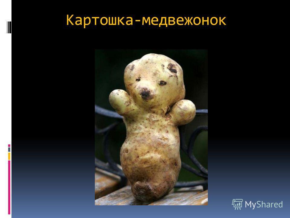 Картошка-медвежонок
