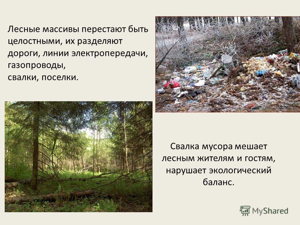 Лесные массивы перестают быть целостными, их разделяют дороги, линии электропередачи, газопроводы, свалки, поселки. Свалка мусора мешает лесным жителям и гостям, нарушает экологический баланс.