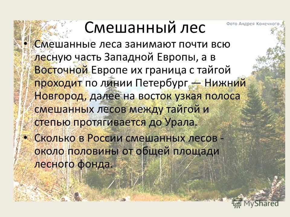 Смешанный лес Смешанные леса занимают почти всю лесную часть Западной Европы, а в Восточной Европе их граница с тайгой проходит по линии Петербург Нижний Новгород, далее на восток узкая полоса смешанных лесов между тайгой и степью протягивается до Ур